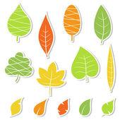 Set of leaves Vector illustration