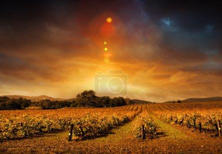 Foto de Hermosa puesta de sol en el atardecer del Valle de barossa en otoño - Imagen libre de derechos