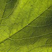 Green leaf close-up