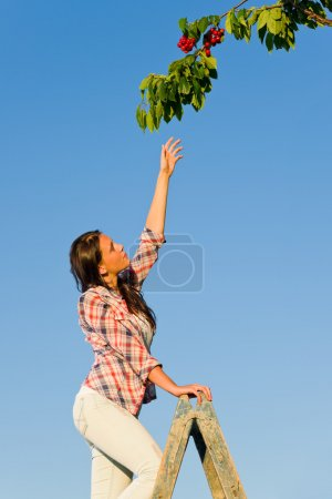 Cherry tree woman reaching high branch summer