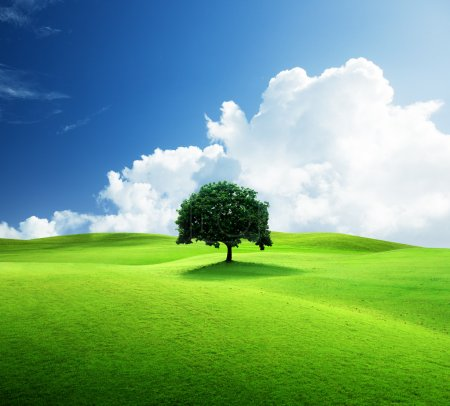 One tree and perfect grass field