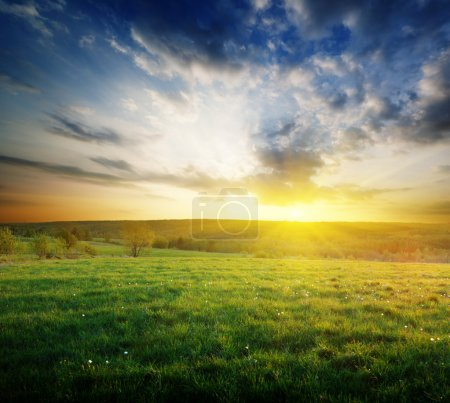 Photo for Spring field of grass in Russia and sunset - Royalty Free Image