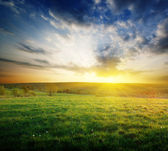 Spring field of grass in Russia and sunset
