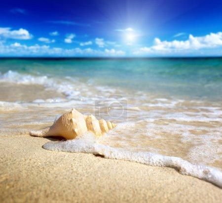 Photo pour Coquillage sur la plage (shallow Dof) - image libre de droit