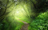 Way in deep forest