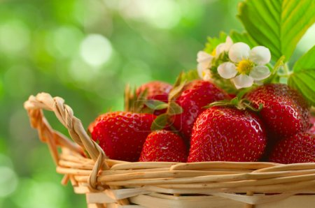 Photo for Strawberries in a basket in the garden - Royalty Free Image