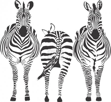 Illustration for Illustration of three zebras, two front, one rear - Royalty Free Image