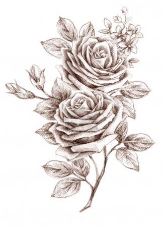 Photo pour Rose à l'ancienne. Dessin à main levée - image libre de droit
