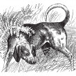 Постер, плакат: Beagle or Canis lupus familiaris vintage engraving