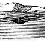 Back Float, vintage engraved illustration. Trousse...