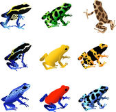 Vector illustrations of a collection of 9 different species of poison dart frogs