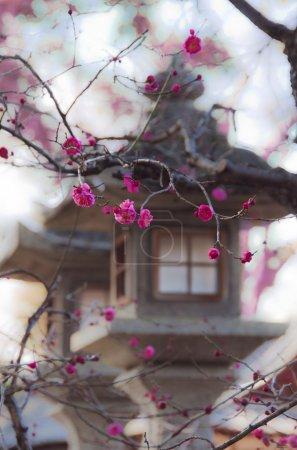 Photo pour Lanterne japonaise de Pierre et rose sakura à kyoto. - image libre de droit