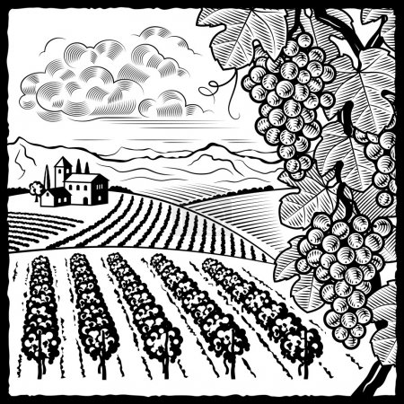 Illustration for Retro vineyard landscape in woodcut style. Black and white vector illustration with clipping mask. - Royalty Free Image
