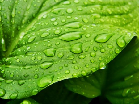 Photo for Green leaf with drops of water - Royalty Free Image