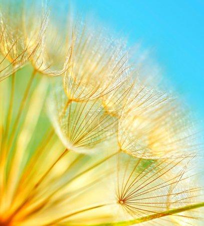 Photo pour Pissenlit doux fleurs macro frontière sur fond bleu ciel - image libre de droit