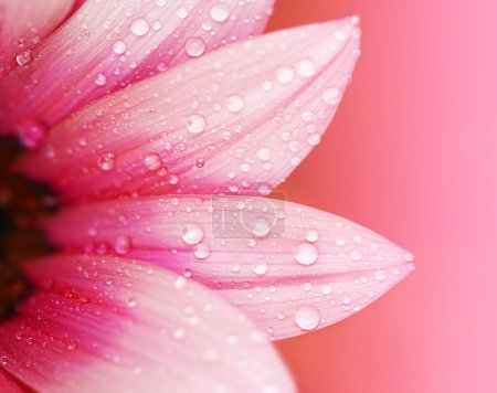 Pink flower petals, macro on flower, beautiful abs...