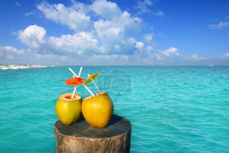 Fresh two coconuts juice water straws in caribbean