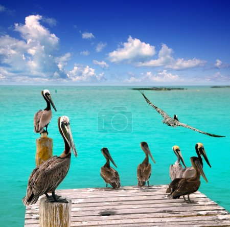 Photo pour Caraïbes pélican turquoise plage vue sur la mer tropicale Mexique - image libre de droit