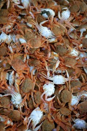 Photo pour Texture de crabe, fond de fruits de mer avec de nombreux crabes méditerranéens - image libre de droit