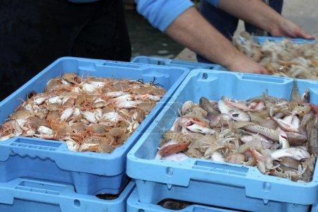 Crab fish mediterranean seafood fisherman boat