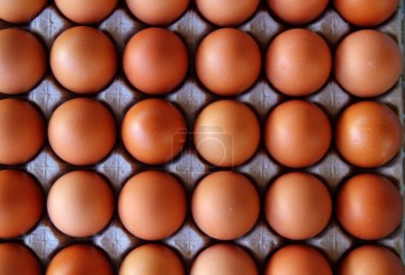 Photo for Hen eggs rows pattern box food background - Royalty Free Image