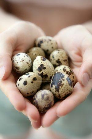Woman hands holding fragile quail eggs