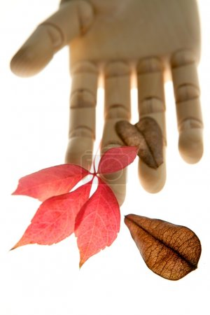 Photo for Mannequin wooden hand holding autumn leaves - Royalty Free Image