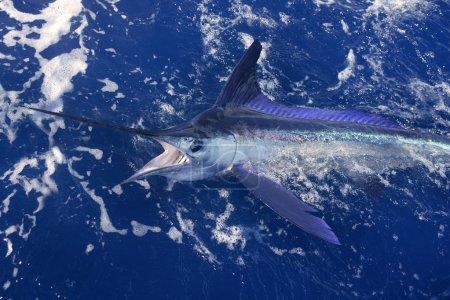 Foto de Marlin blanco atlántico gran juego de pesca deportiva sobre el océano azul de agua salada - Imagen libre de derechos