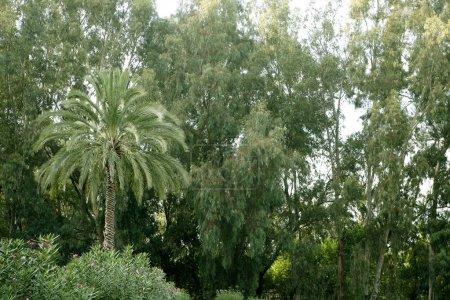 Nature fauna and flora