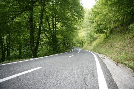 route de courbe sinueuse dans une forêt de hêtres d'asphalte