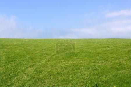 Photo for Green meadow horizon and blue sky tranquil landscape scene - Royalty Free Image