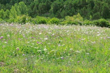 Foto de Flores del Prado campo al aire libre naturaleza primavera fondo - Imagen libre de derechos
