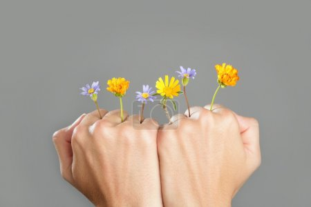 Photo for Concept of life with plant growing from woman hands - Royalty Free Image