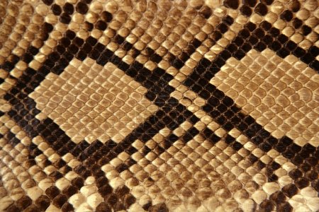 Background snake skin pattern brown