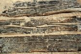 Aged beach wood texture with sand weathered