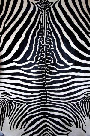 Animal zebra skin black and white fur stripes