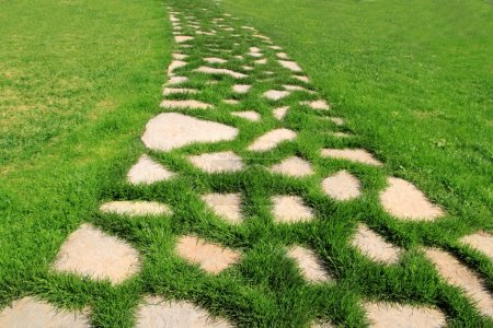 Stone path in green grass garden texture
