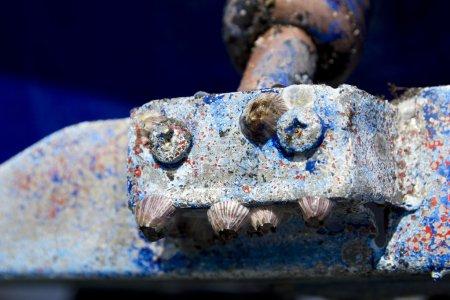 Photo pour Barnacles dans la coque du bateau rabat macro détail avant peinture antisalissure - image libre de droit