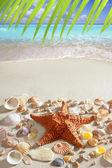 Beach sand starfish caribbean tropical sea