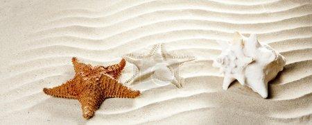 Caribbean tropical wavy white sand starfish shell