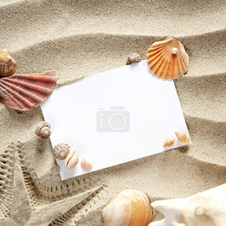Copyspace blank space summer starfish sand shells