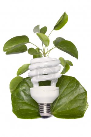 Light bulb standing on a white background