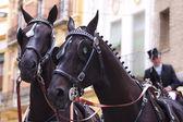 Taženém koňmi v seville