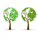 4 trees in four seasons...