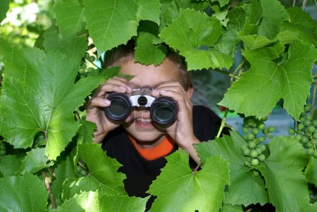 Photo for The boy looks in the flield-glass has hidden behind grape leaves. - Royalty Free Image