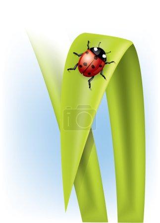 Illustration for Ladybug on grass - Royalty Free Image