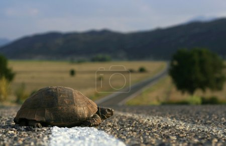 Turtle on the road along the lake Beysehir