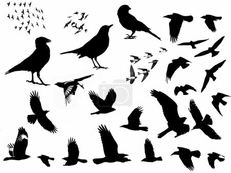 Birds silhouette isolated on white background