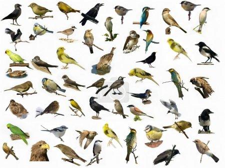 Set birds isolated on white (4)
