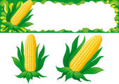 Two isolated corns and web banner for thanksgiving